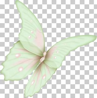 Butterfly Flight Wing Icon PNG