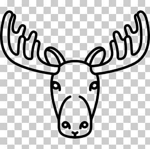 Reindeer Drawing Moose PNG