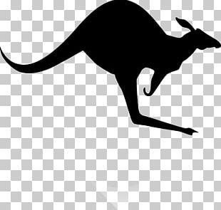 Koala Red Kangaroo PNG