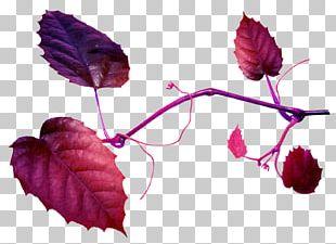 Leaf Flower Petal Soap Bubble Plant Stem PNG