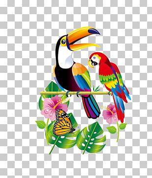 Parrot Bird Toucan PNG