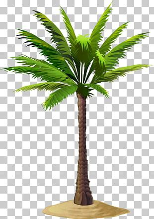 Arecaceae Asian Palmyra Palm PNG