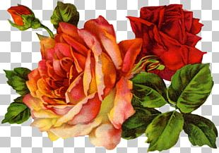 Vintage Roses: Beautiful Varieties For Home And Garden Vintage Clothing PNG