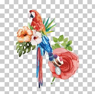 Bird Cockatoo Watercolor Painting Macaw PNG