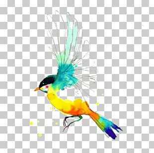 Drawing Birds Watercolor Painting PNG