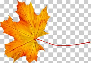 Autumn Leaf Photography PNG