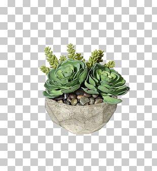 Succulent Plant Container Garden Houseplant Gardening PNG