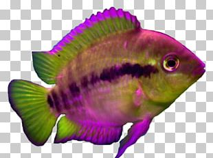 Marine Biology Aquariums Coral Reef Fish Marine Mammal PNG