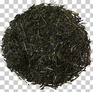 Gyokuro Sencha Oolong Darjeeling White Tea PNG