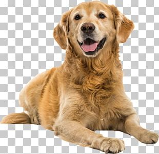 Golden Retrievers 2018 Diary Border Collie Westminster Kennel Club Dog Show Puppy PNG