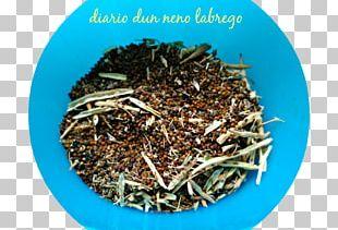 Nilgiri Tea Hōjicha Tea Plant PNG