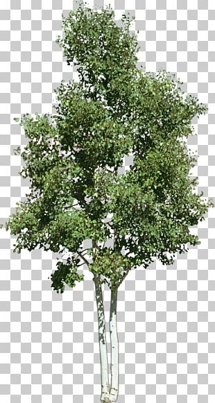 Look At Trees PNG
