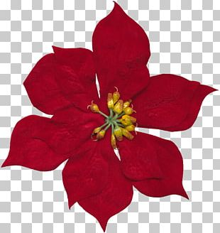 Cut Flowers Floral Design Rosaceae PNG
