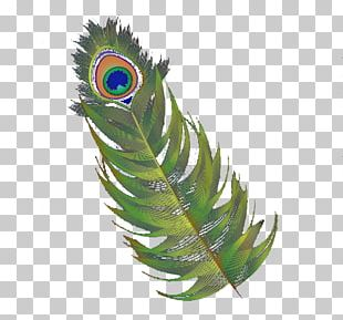 Feather Asiatic Peafowl Hair PNG