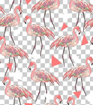 American Flamingo Shutterstock Pattern PNG