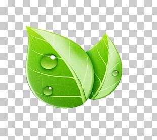 Leaf Ecology Illustration PNG