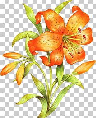 Orange Lily Floral Design Drawing Flower PNG