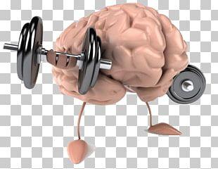 Brain Human Body Mental Health Healthy Diet PNG