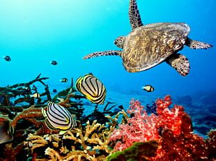 Coral Reef Fish Ecosystem PNG