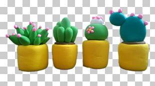 Cactaceae Color Plant Cactus Garden PNG