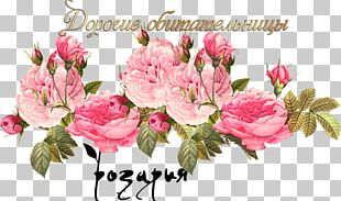 Vintage Roses: Beautiful Varieties For Home And Garden Cabbage Rose Vintage Clothing Pink Flowers Scrapbooking PNG