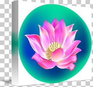 Nelumbo Nucifera Desktop Chinese New Year Computer Petal PNG