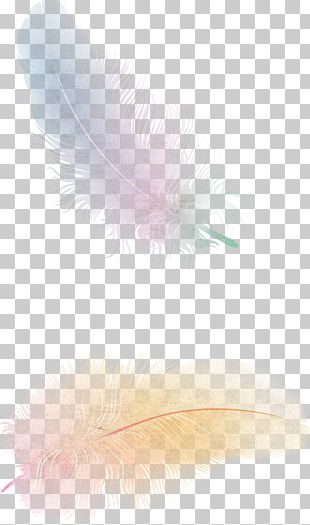 The Floating Feather Flight Bird PNG
