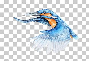 Bird Watercolor Painting Architect Illustrator PNG