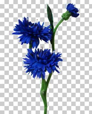 Plant Stem Blue Cut Flowers Artificial Flower PNG
