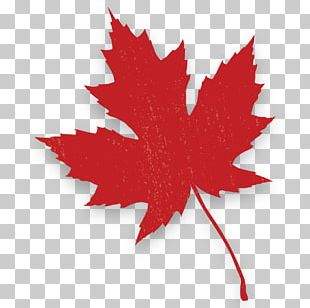 Red Maple Canada Maple Leaf Autumn Leaf Color PNG