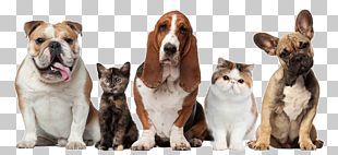 Pet Sitting Dog Cat Beechwood Veterinary Clinic PNG