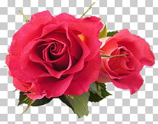Flower Gfycat Gift PNG