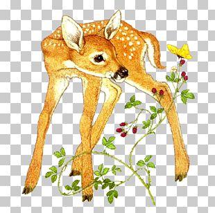 Roe Deer Red Deer Felidae Sika Deer PNG