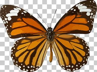 Monarch Butterfly Viceroy Animal Migration PNG