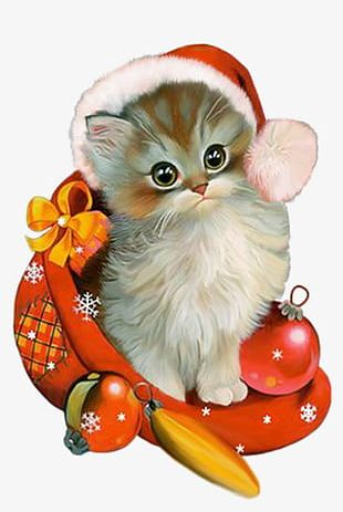 Kitten Christmas Costumes PNG