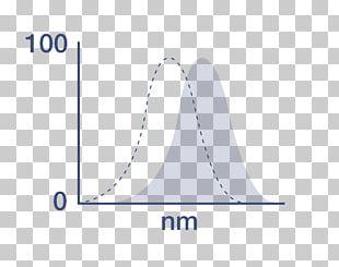 Wiring Diagram Immunoglobulin G Antibody F(ab)2-Fragment PNG