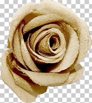 Garden Roses Beach Rose PNG