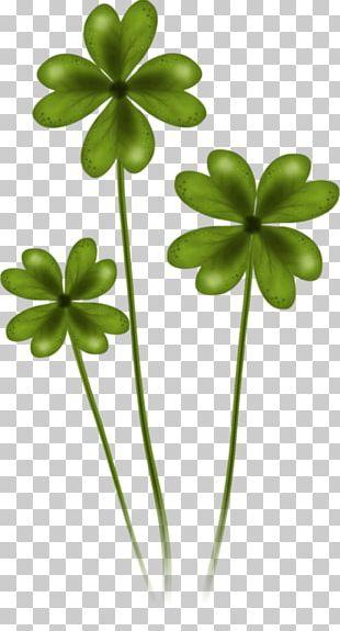 Saint Patrick's Day 17 March Shamrock PNG