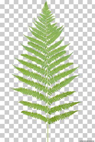 Leaf Fern Flower Plant PNG