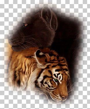 Tiger Cat Art Whiskers Desktop PNG