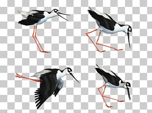 Water Bird White Stork Wader PNG