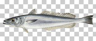 Sardine Fish Products Cod Merluccius Merluccius Hake PNG
