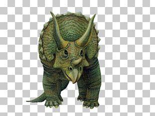 Triceratops Wall Decal Dinosaur Tyrannosaurus PNG
