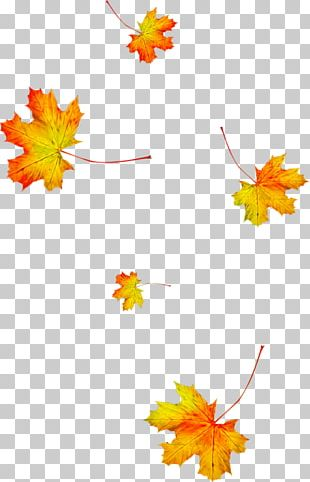 Autumn Leaves Animation Leaf Season PNG