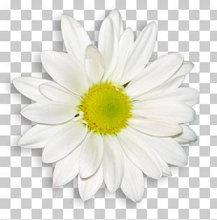 Common Daisy Flower Bouquet Wedding Dress White PNG