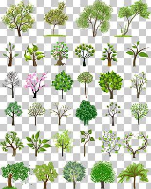 Tree Euclidean Illustration PNG