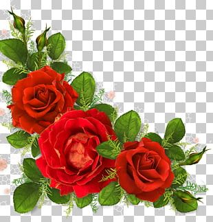 Garden Roses Portable Network Graphics Flower PNG