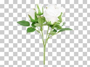 Cut Flowers Rose Family Plant Stem Bud Flowerpot PNG