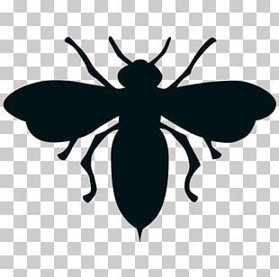 Insect European Dark Bee Black And White Drawing PNG