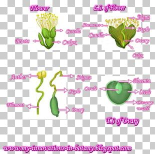 Flowering Plant Line Plant Stem PNG